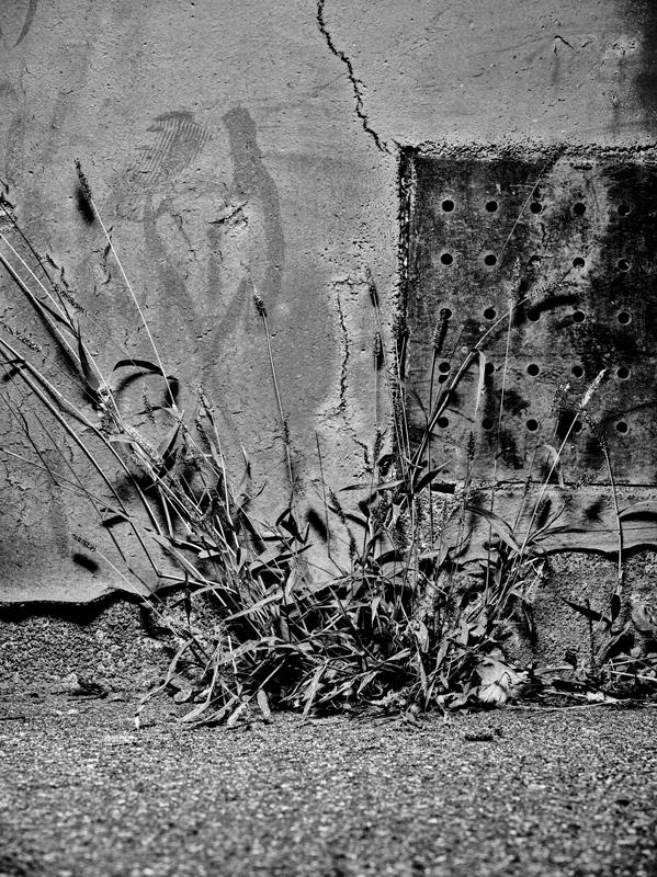 jf verganti plantes sdf 12