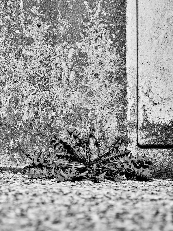 jf verganti plantes sdf 19