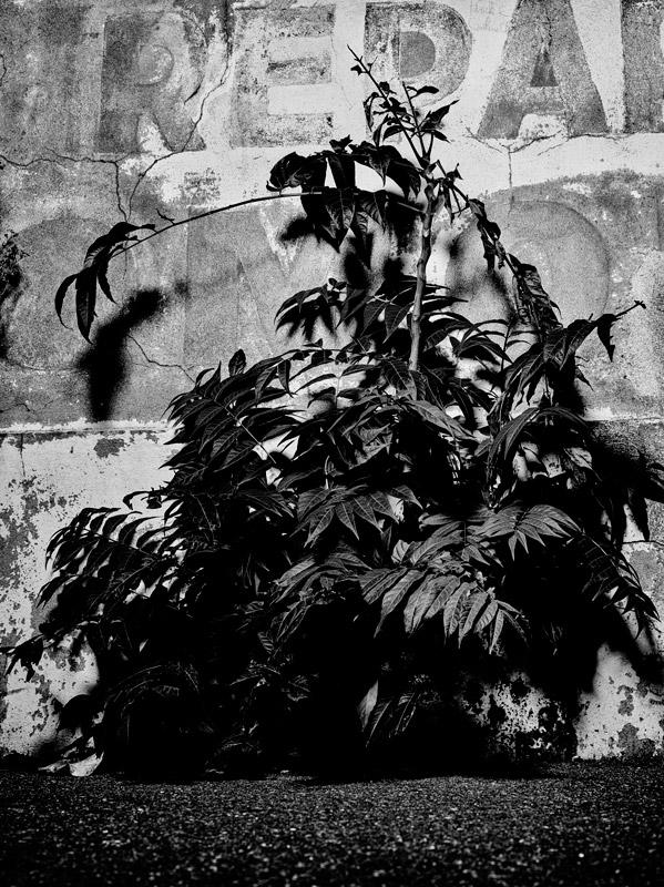jf verganti plantes sdf 2