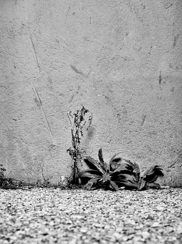 jf verganti plantes sdf 20