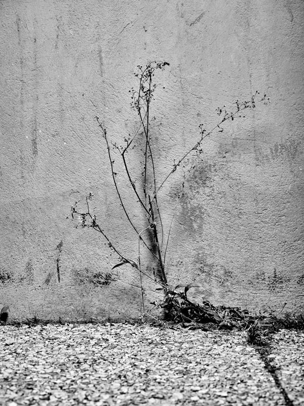 jf verganti plantes sdf 21