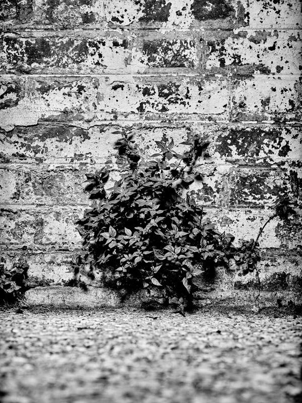 jf verganti plantes sdf 23