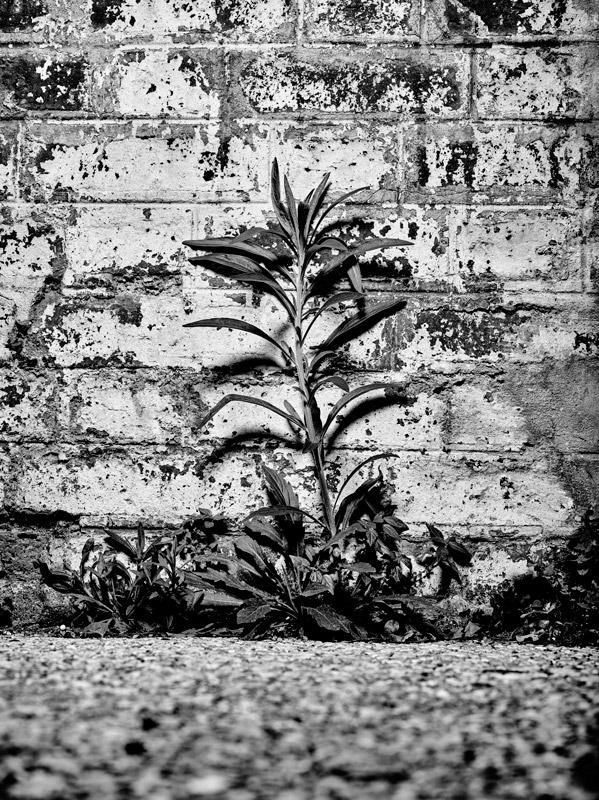 jf verganti plantes sdf 24