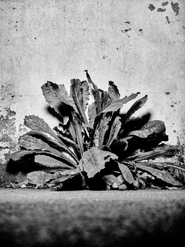 jf verganti plantes sdf 28
