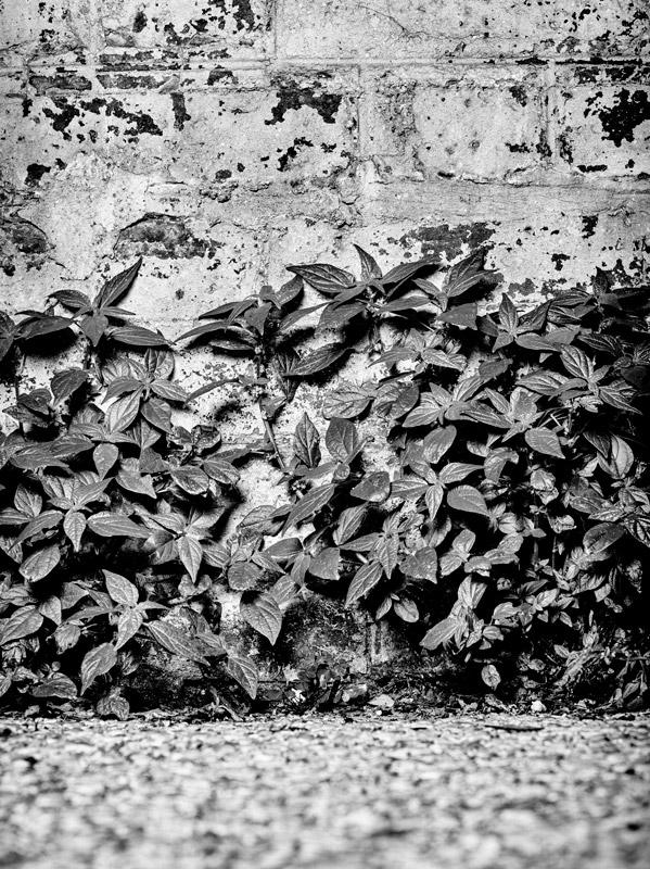jf verganti plantes sdf 32