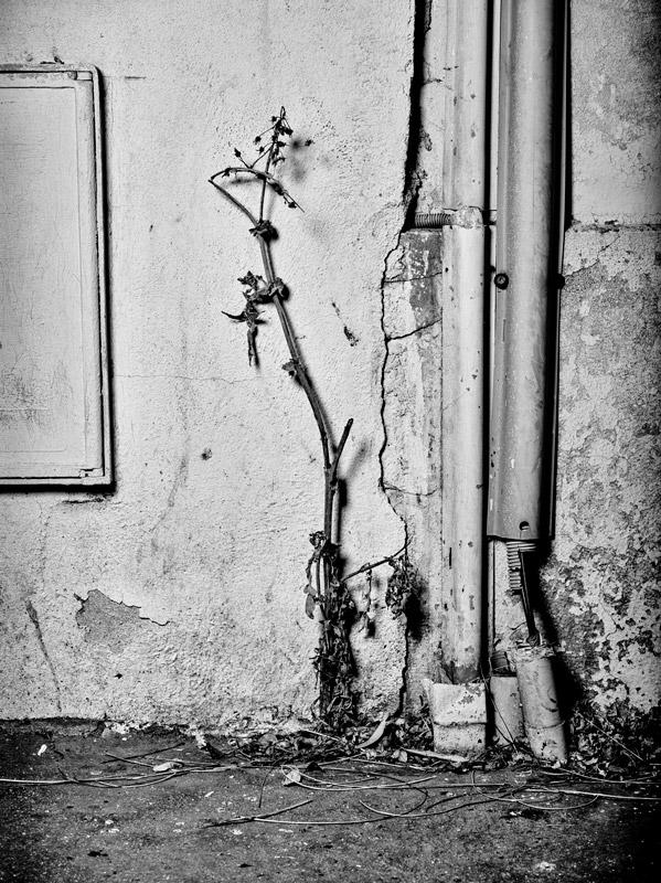 jf verganti plantes sdf 36