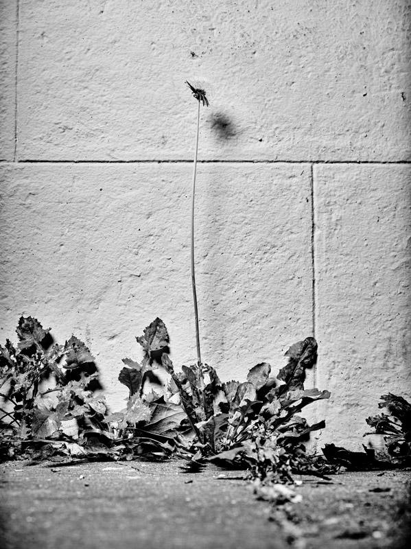 jf verganti plantes sdf 38