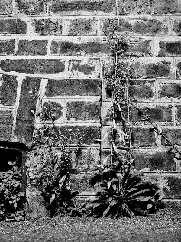 jf verganti plantes sdf 4