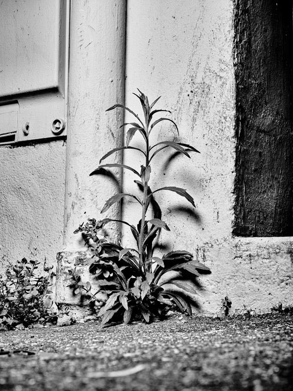 jf verganti plantes sdf 40