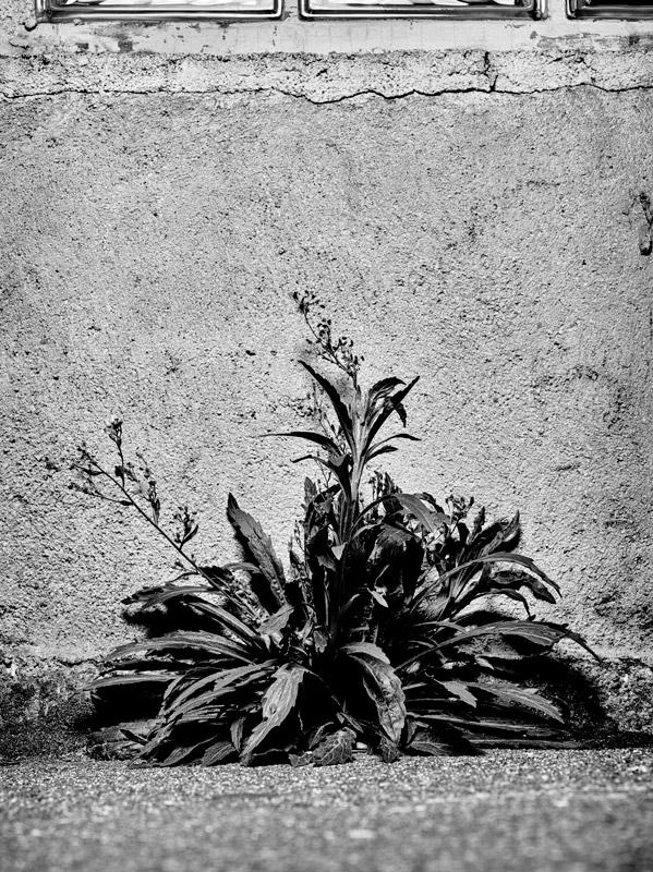 jf verganti plantes sdf 6