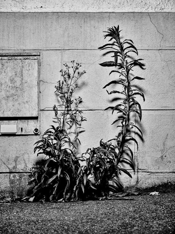 jf verganti plantes sdf 8