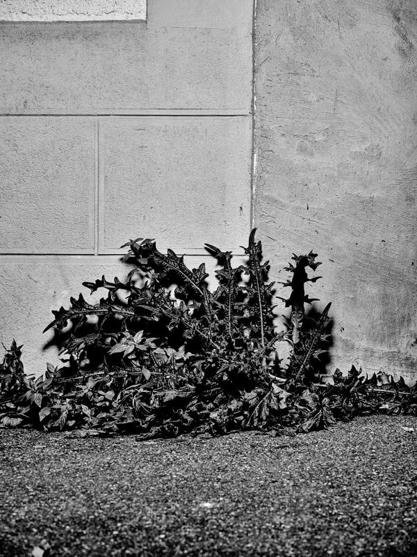 jf verganti plantes sdf 9