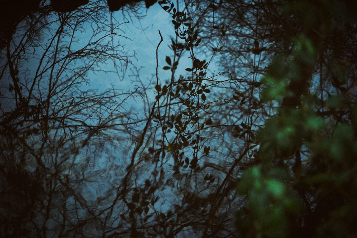 jf verganti reflets eau forêt 2