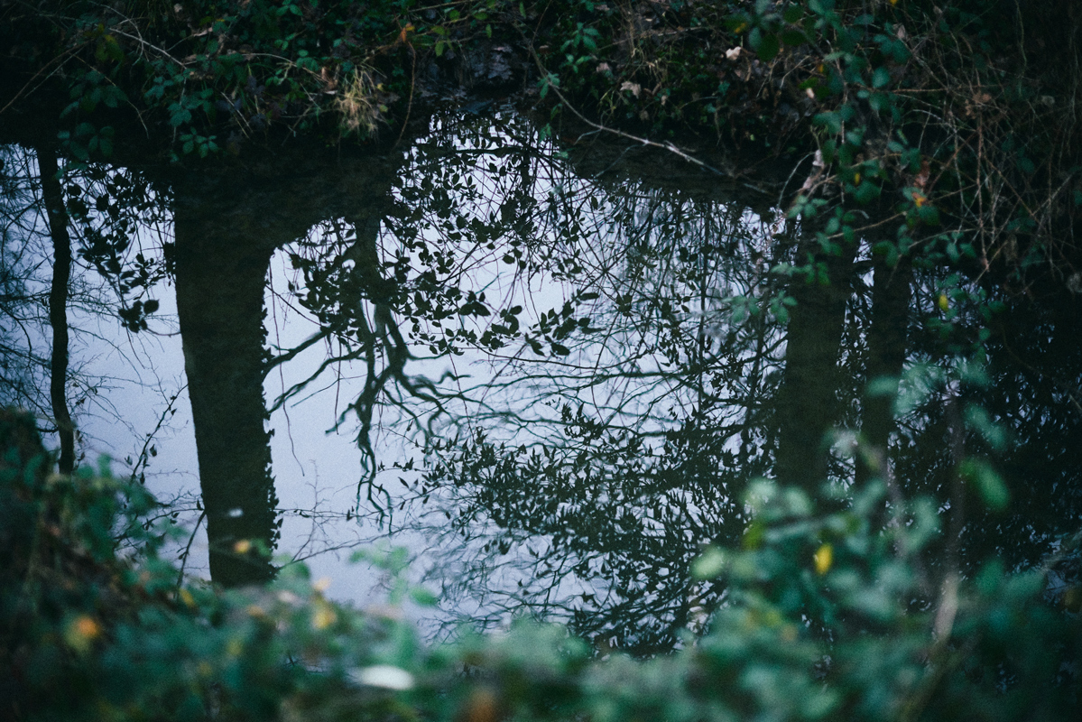 jf verganti reflets eau forêt 1