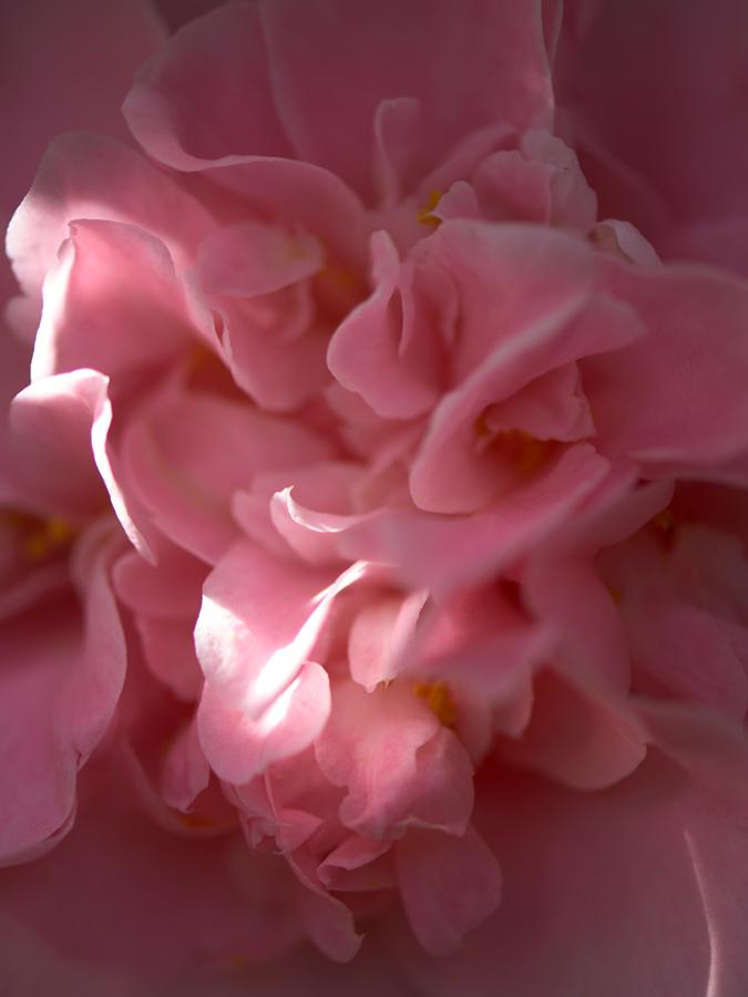 JF Verganti fleur