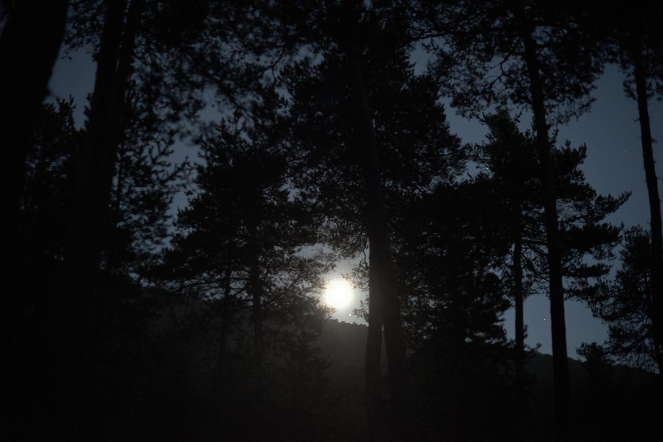 _JFV brame au clair de lune